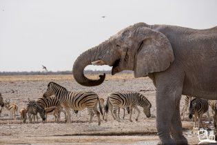 5 redenen waarom je moet reizen door Namibie