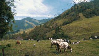 Valle de Cocora in Colombia