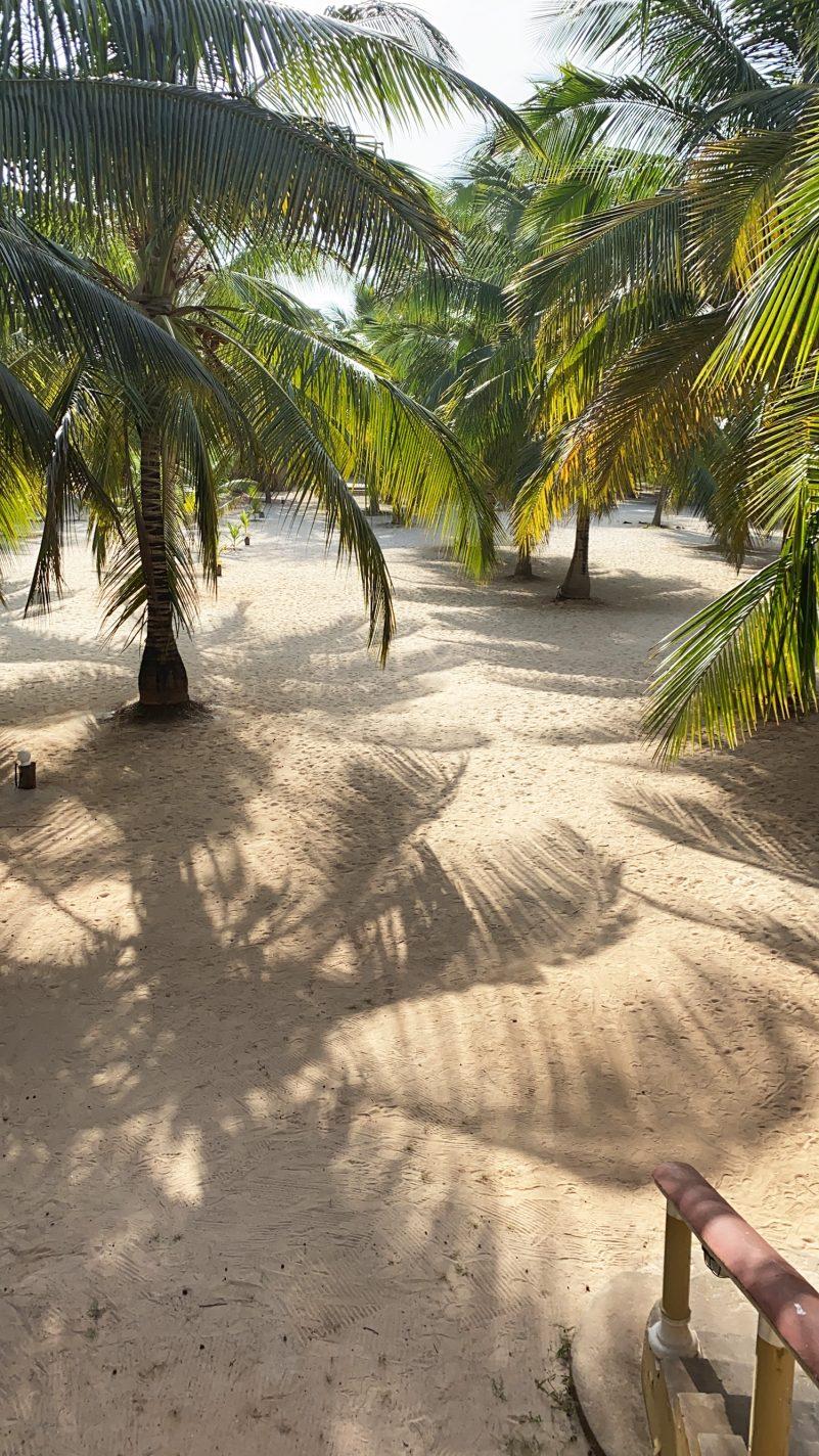 De prachtige palmbomen op het strand