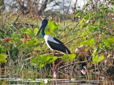 Corroboree Billabong Wetland Cruise