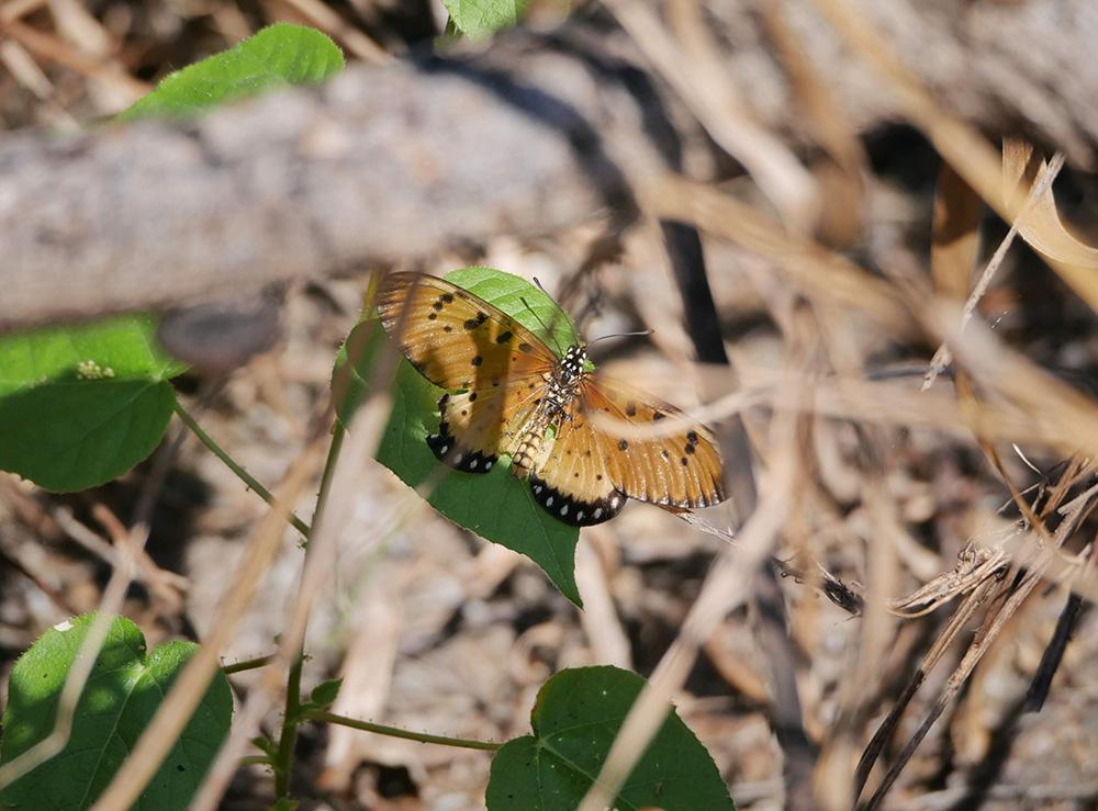 En nog een mooie vlinder gespot